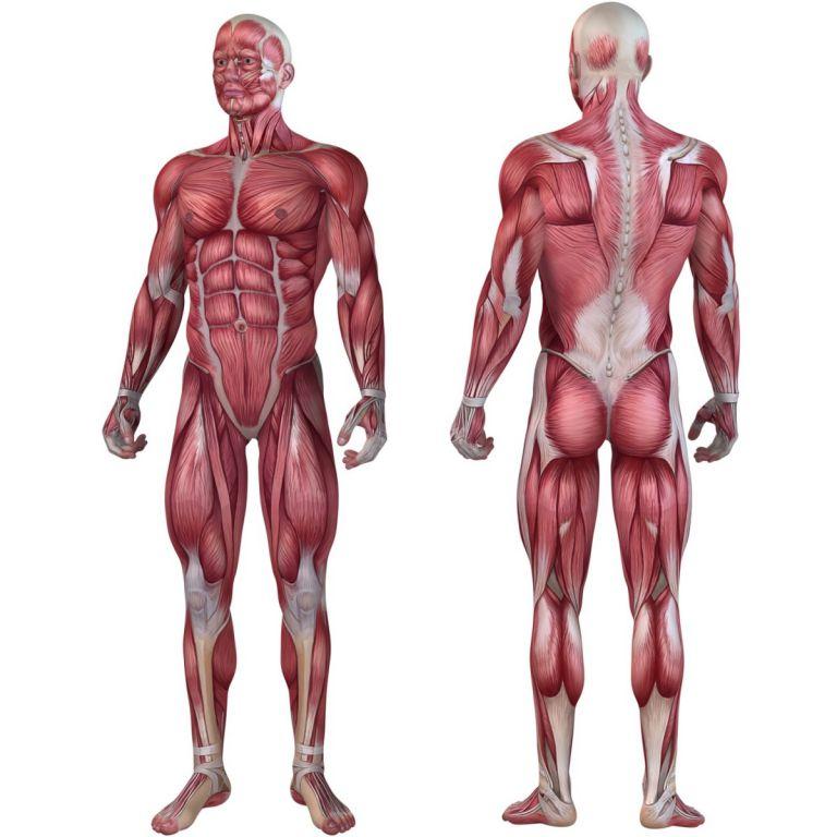 Posilňovací masážny valec - FITNESS ROLLER MOVIT fialová